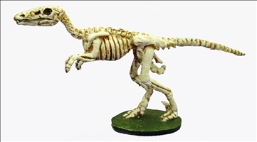 Skeletal Raptor